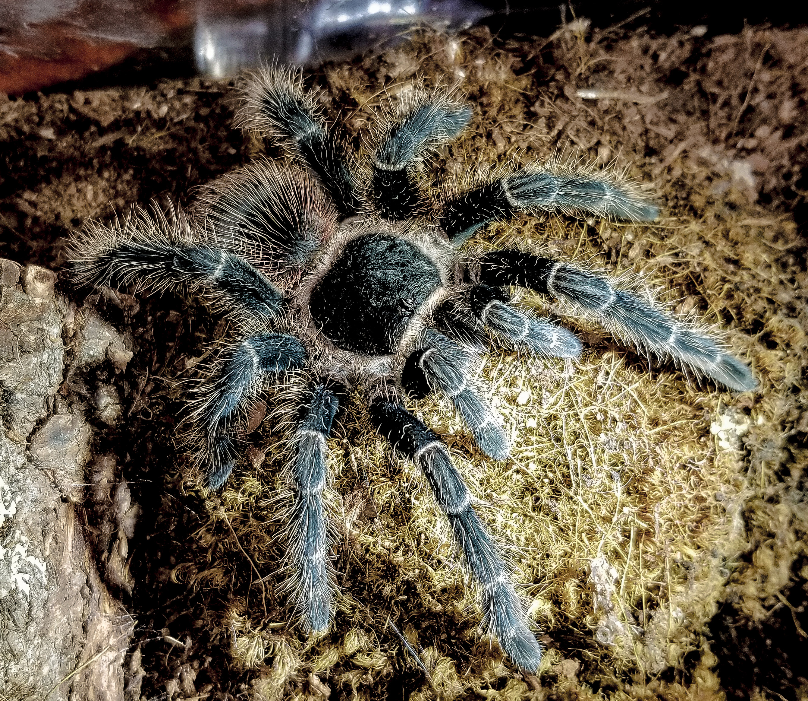 L klugi Justina 2nd day May 2018 molt1.jpg