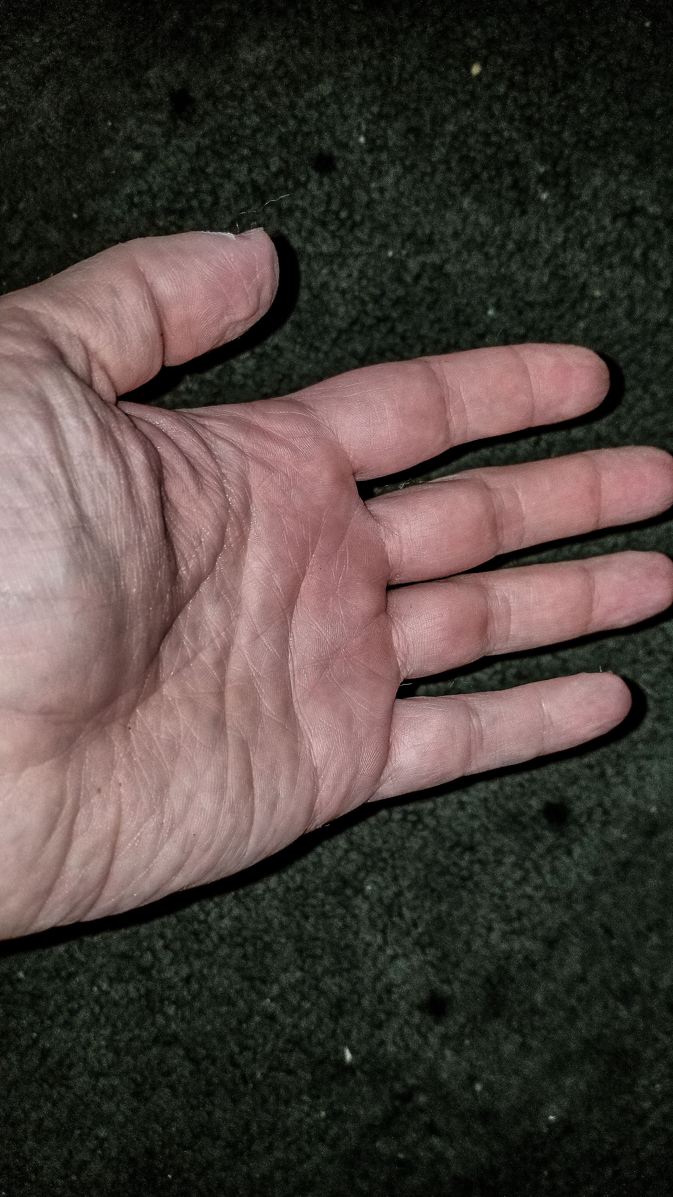 T stirmi Mindy unbitten hand 1.jpg