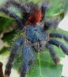 Keeping Clean: Proper Tarantula Enclosure Hygiene