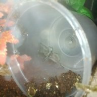 tarantula love