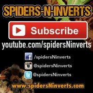 spidersNinverts