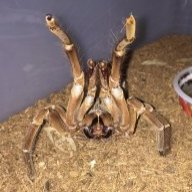 SpiderDad61