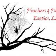 PinchersNPokies