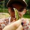 Reptisect