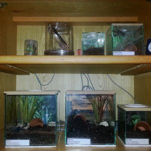 Our Tarantula enclosures