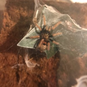 My gbb just  hanging out...
