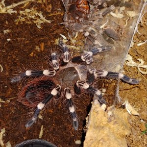 A.genic freshly molted